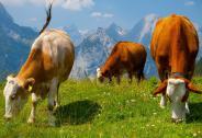 杜坤维:上市公司现金奶牛长期持股回报惊人