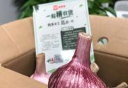 为何全国滞销的大蒜,能在拼多多上一天卖出4.7万单?