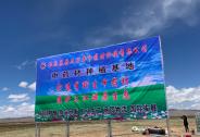 青海最高海拔贫困县的脱贫试验,曲麻莱县半野生中草药种植之梦